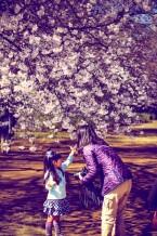 Enjoying the Sakura