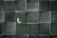 Green In Black Past