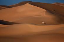 Lonely Between Dunes