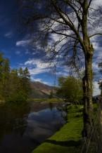 الشجر والنهر