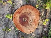 Life Inside a Tree