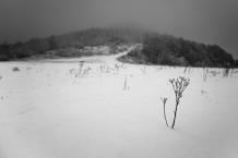 Winter comming
