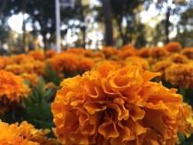 الورود الساحره