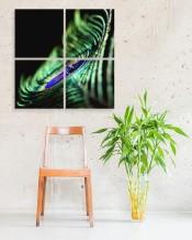 Peacock by Zainab Abdal