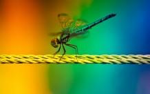 Dragonfly XD
