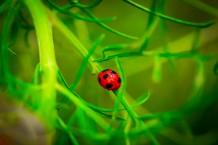 Farewell Ladybug