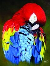Colombian Colors