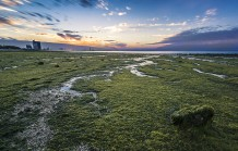 Shuwaikh Beach