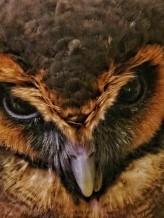 Angry Owel