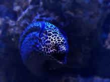 Eel No.1
