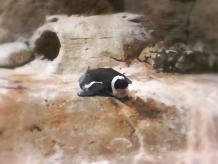 Penguin No.1