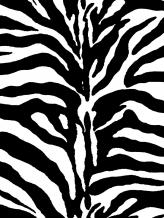 Zebra No.1