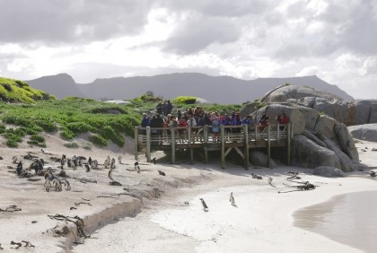 Penguins beach in Cape Town