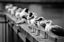 طيور النورس في وقت الاسترخاء