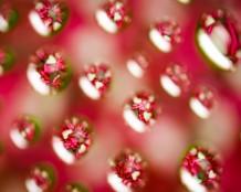 قطرات الحب