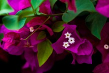تفتح الزهور