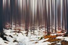 الخشب المتجمد