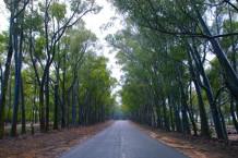 طريق الغابة